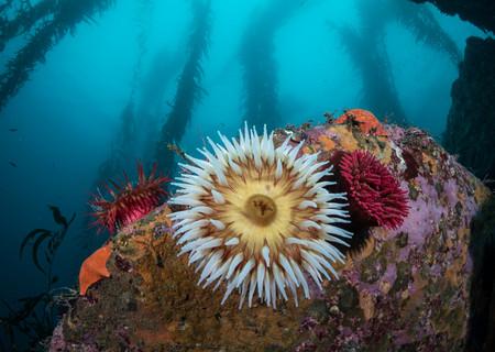 Reef colors off the coast of Carmel, CA
