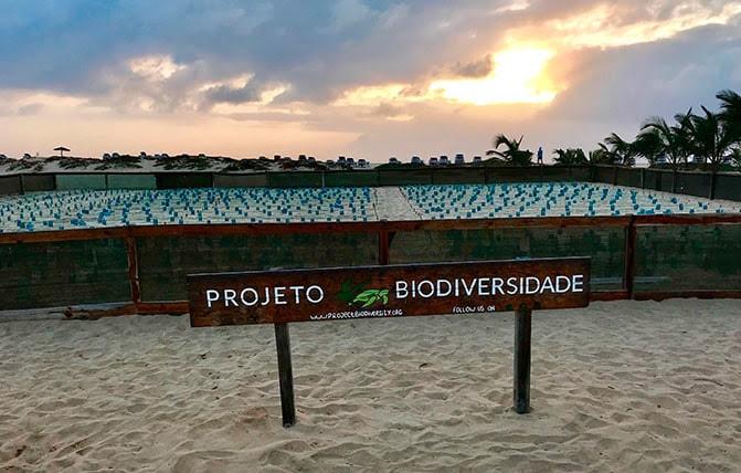 Cape Verde reports record nesting figures for loggerhead sea turtles