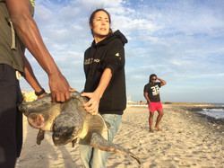 Injured Olive Ridley rescue