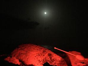 Mission Loggerhead: Projeto Biodiversiade Beach Patrols