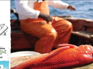 """Projeto Biodiversidade lança iniciativa """"Sustentável, do Mar ao Prato"""" no apoio à pesca sustentável"""