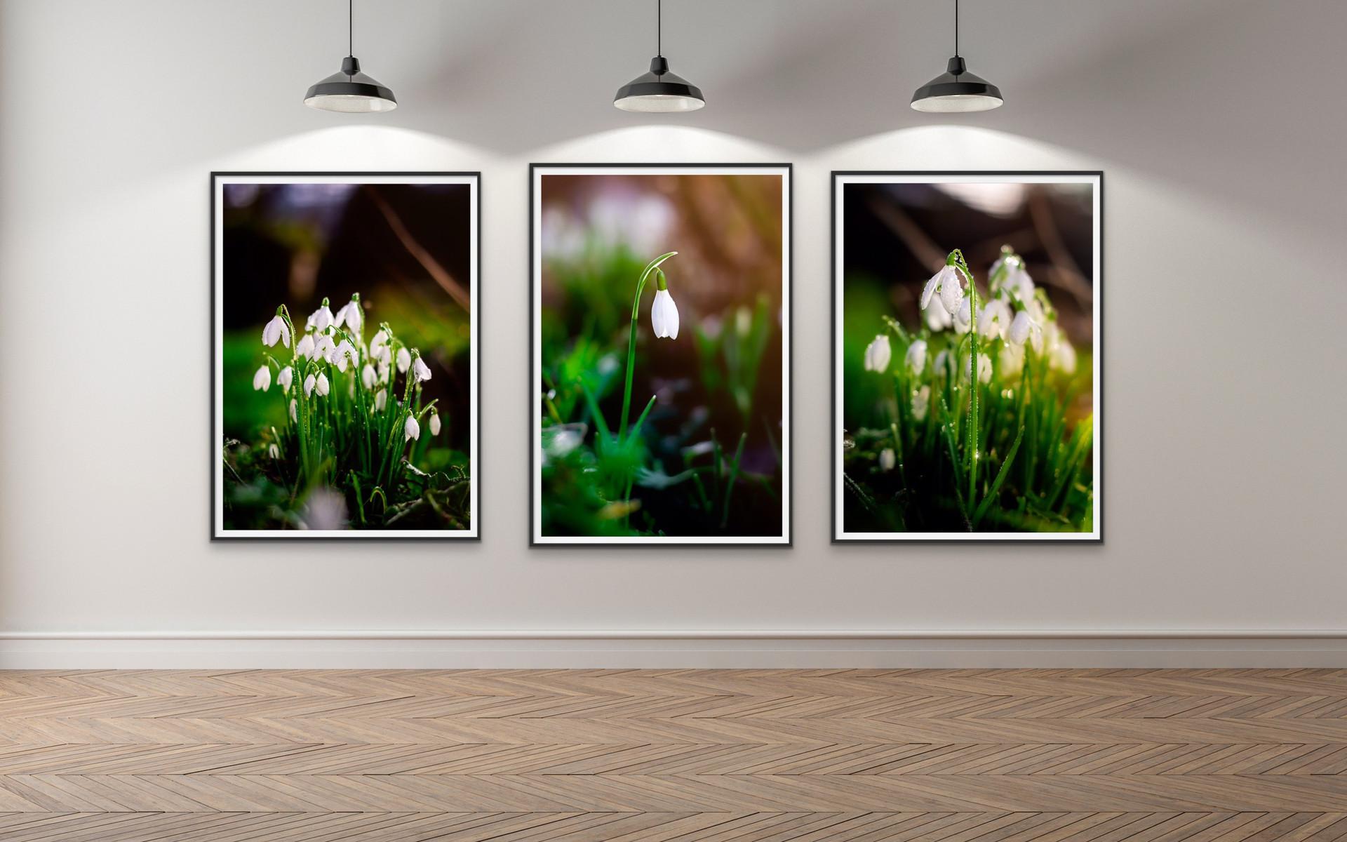 Snowdrops Triptych