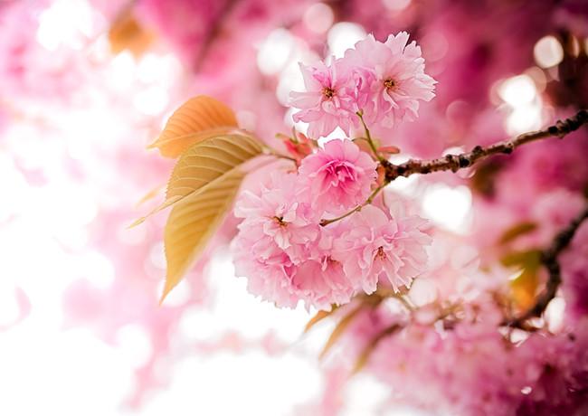 may blossoms (1 of 1).jpg
