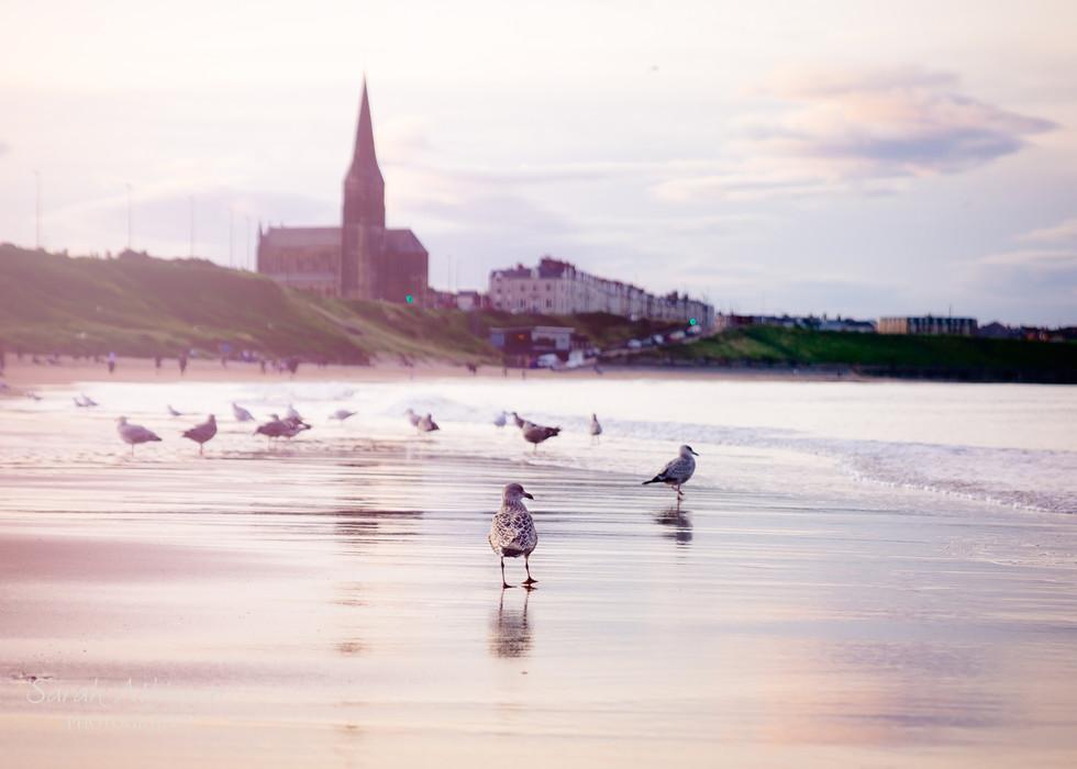 Annual General Seagulls Meeting