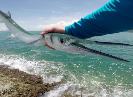 """""""Людоеды моря"""" - опасные морские животные."""