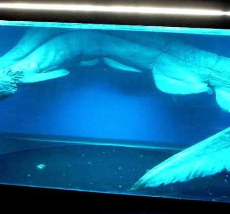 Драконы моря - живые существа в легендах.
