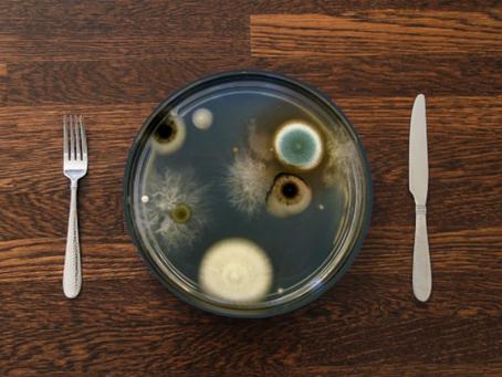 Домашний тлен: токсины черной плесени.