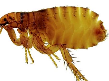 Yersinia Pestis. Можно ли умереть от чумы в 21ом веке?