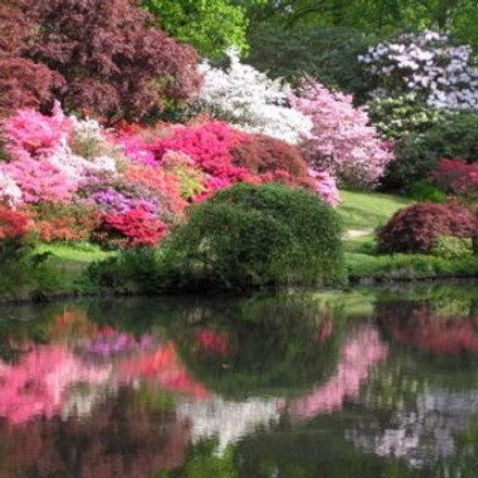 Цветочная рапсодия. Весеннее путешествие по южной Англии