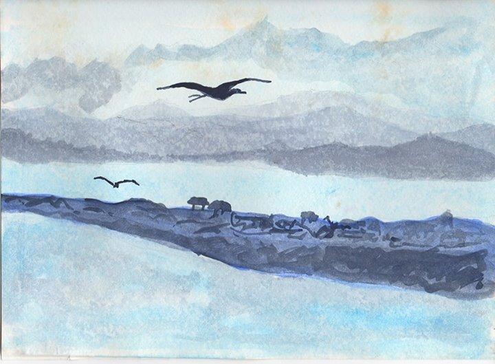 Seagull over Mazatlán
