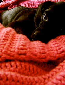 kingston into thoughtful nap