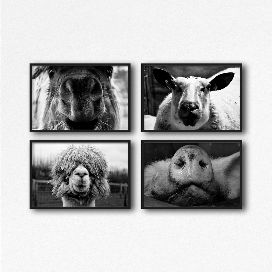 Framed Photos Mockup