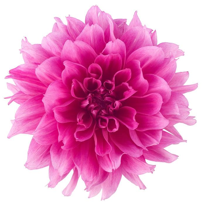 iStock-118346268XLarge_Pink.jpg