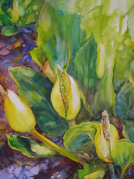 Lysichiton !6 x 20  Water Color   framed