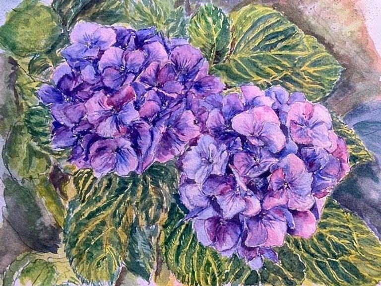 Watercolor    11.5 x15 inch  Hydrangea ,