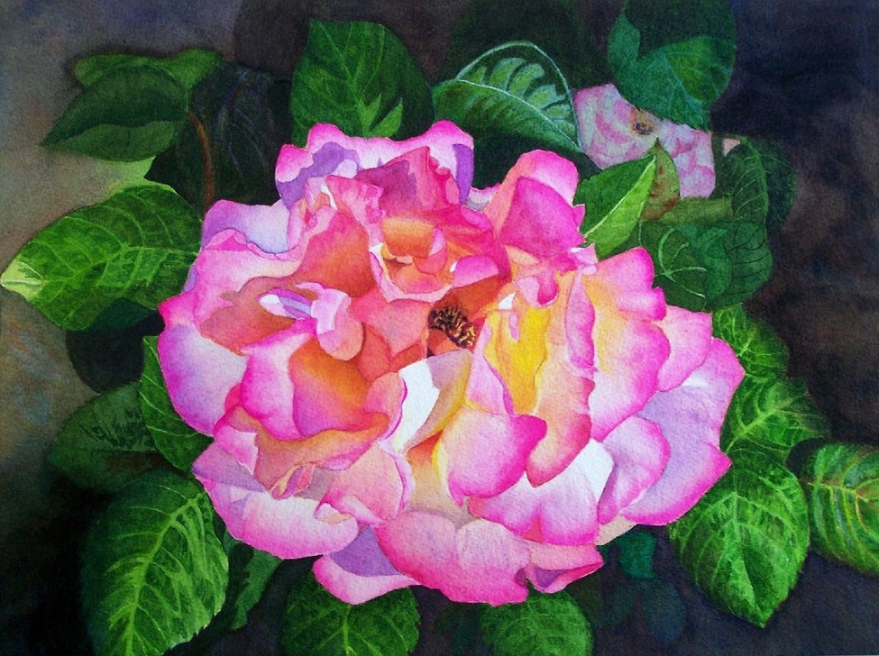 Chicago Peace Rose, Watercolor 12x16x2.j