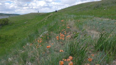 Wandering Wednesdays - Buffalo Pound Property: Nature Conservancy of Canada