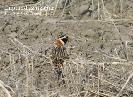 Yellowgrass Sloughs and Marshland