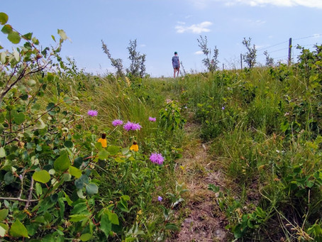 Wandering Wednesdays - Fairy Hill: Nature Conservancy of Canada - Nature Destination