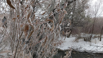 Wandering Wednesdays - Winter Edition Secret Path to a Bird Habitat