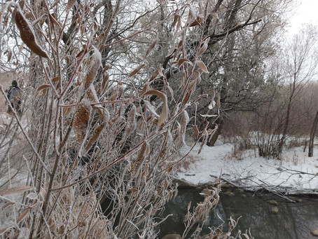 Wandering Wednesdays - Winter Edition Secret Path to a Bird Habitat