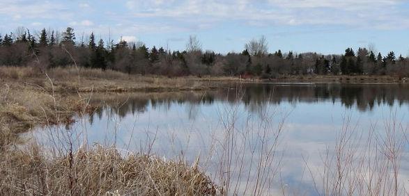 Lakeside View.jpg