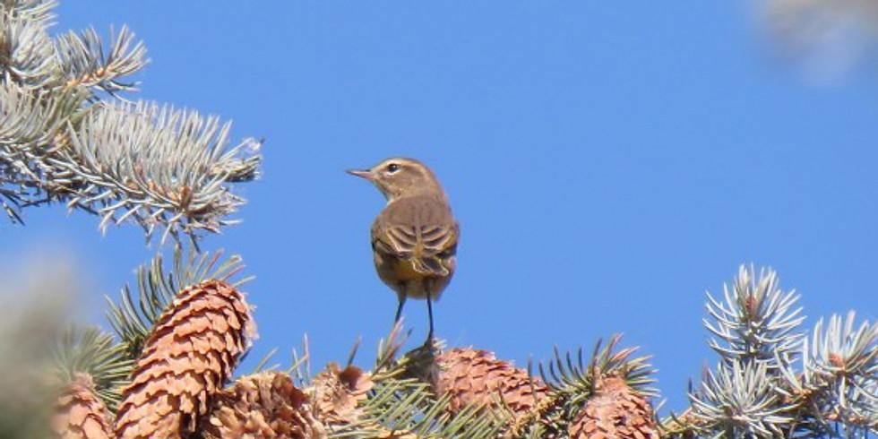 CANCELLED Birding at Les Sherman Park