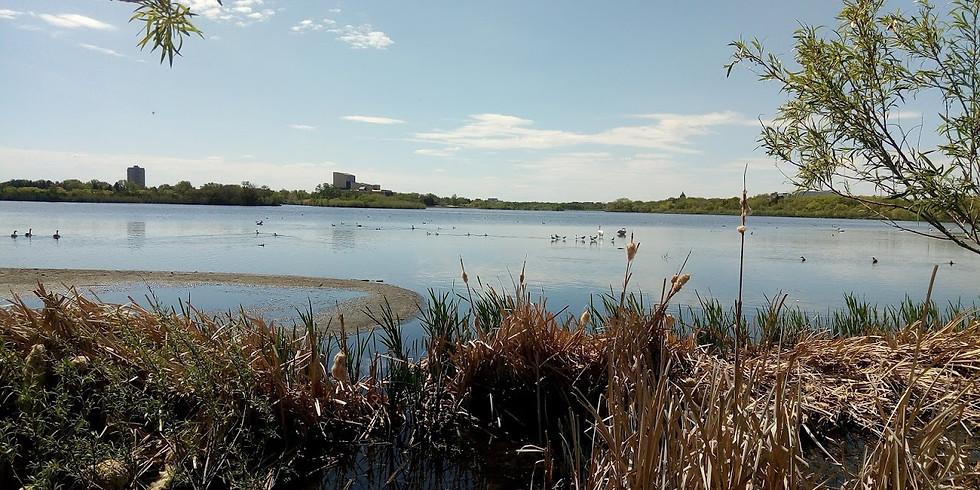 World Migratory Bird Day 10:00 a.m.