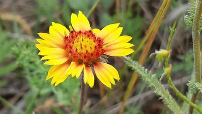 Wildflower Wonder at Wascana McKell Conservation Park