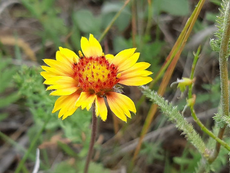 Wildflower Wonder at Wascana McKell Conservation Park