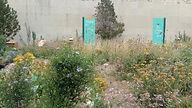 native plant garden.jpg