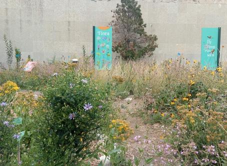 L'« autre jardin » du parc Wascana
