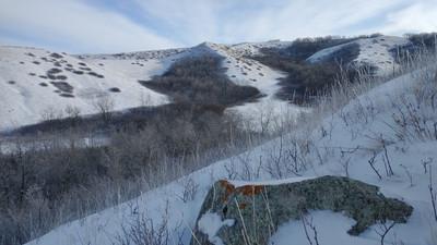 Wandering Wednesdays - Winter Edition Hidden Valley Wildlife Refuge
