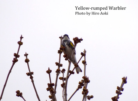 Migratory Bird Day at Buffalo Pound