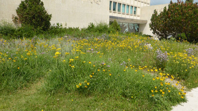 Native Plant Garden in the middle of the city