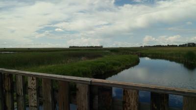 Zone humide paradisiaque au parc de conservation McKell Wascana