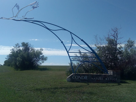Condie Nature Refuge Continued