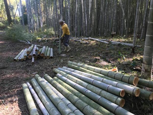 coupe bambou.jpg