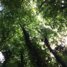 Looking up at the tree's.