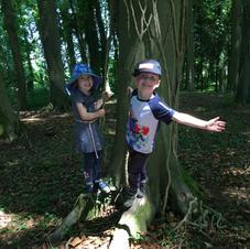 Exploring the tree's.