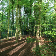 Our woodland area.
