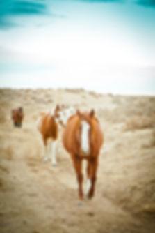 Horses roaming in Wyoming