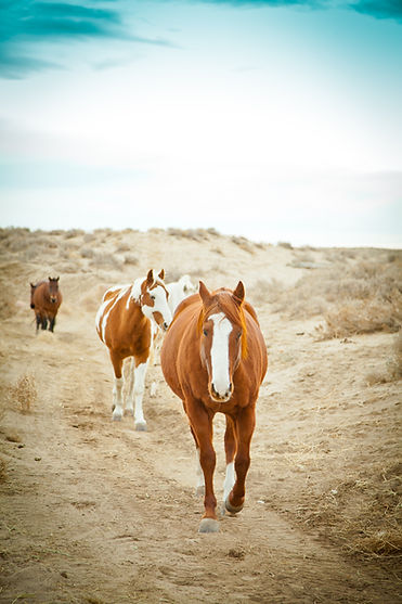 Horses roaming in Wyoming