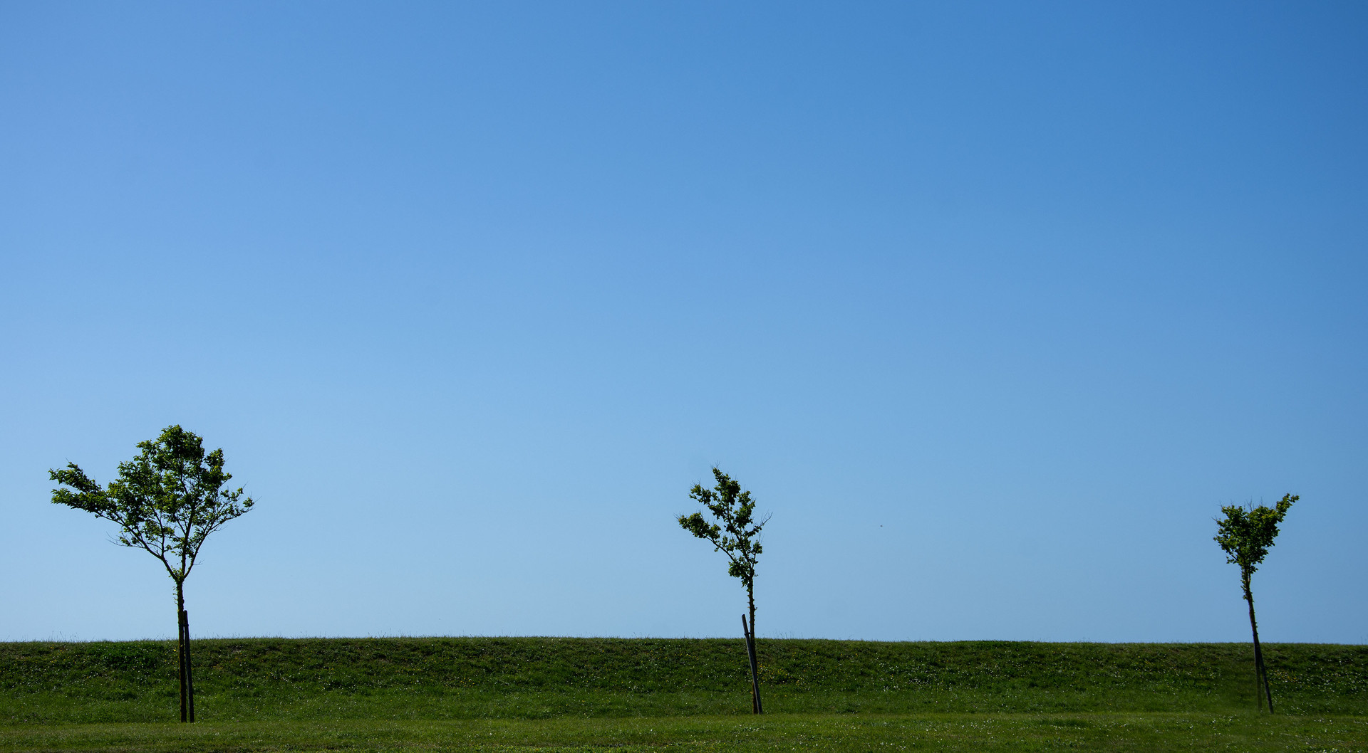 Saint Martin en Ré - Les 3 arbres