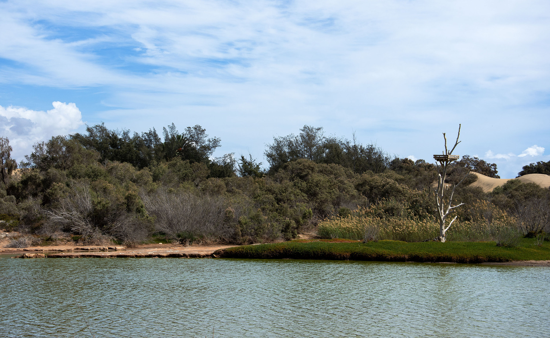 Maspalomas - Réserve naturelle