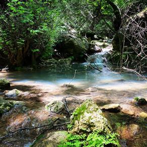 מחיאות כפיים לטבע - מסלול אביבי בנחל עמוד