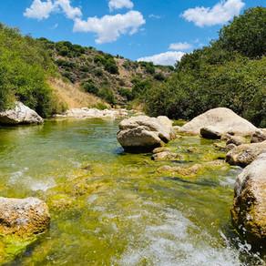 נחל דישון בגליל העליון - כמעט סוף העולם שמאלה, אבל ירוק ומלא מים.
