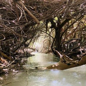 מסלול רטוב במפלים הלבנים - עמק המעיינות