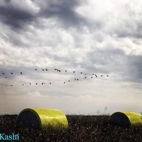 מסלולי טיול לסתיו - ציפורים ושלכת
