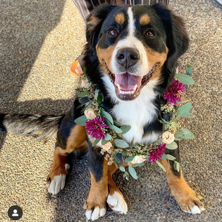 dog floral lei
